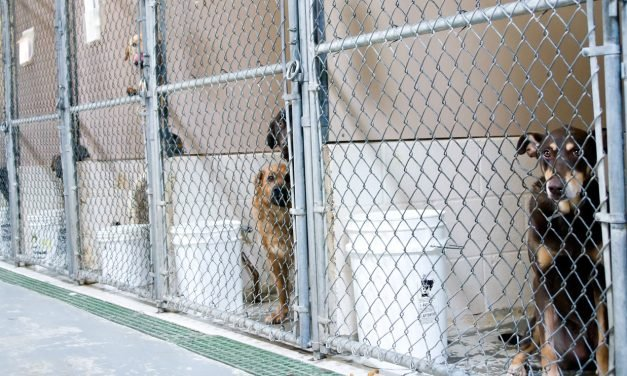 Next Avenue: Take steps now to provide for your pets in case you can't