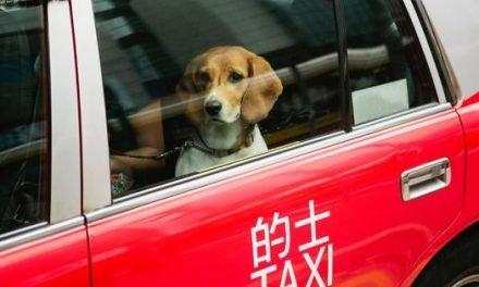 Best Pet-Friendly Hotels In Hong Kong