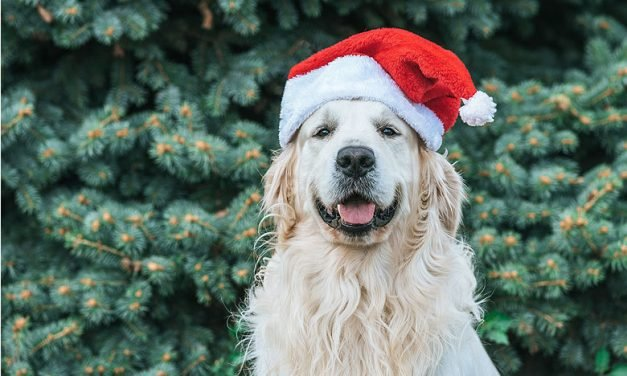 Taking the dog with you over the holidays? Know your 'petiquette' first