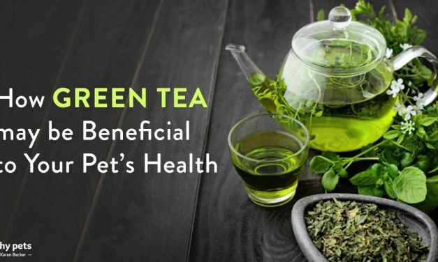 A Nutritional Powerhouse for Humans, Green Tea for Your Pet?