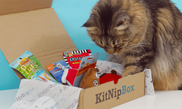 Yes, your cat deserves a subscription box, too