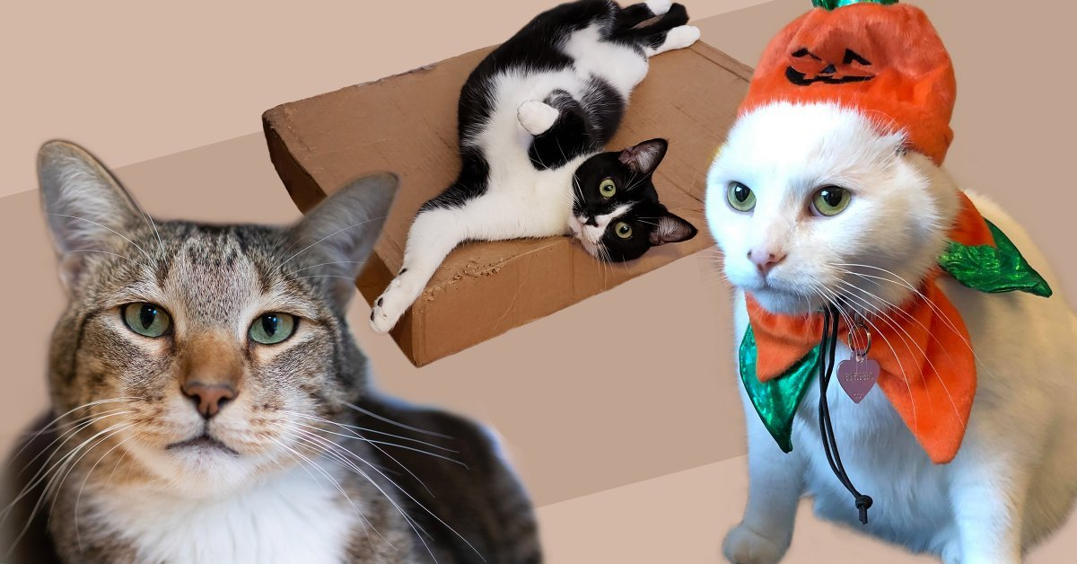 Welcome to the Ultimate Chaotic Catittude Power Ranking of the Cattiest Cats Around