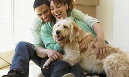 Is Residential Real Estate Going To The Dogs?