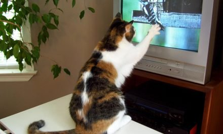 Pets 4 home entertainment: Welcome to the world of TV for cats and books for dogs