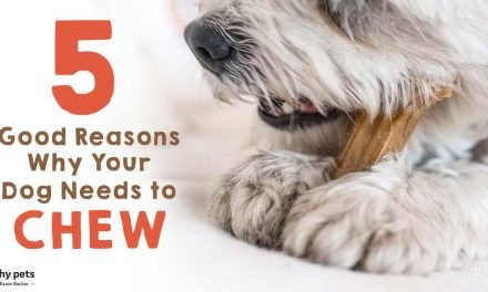 5 Good Reasons Why Your Dog Needs to Chew