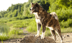 The 10 Most Ancient Dog Breeds In Existence