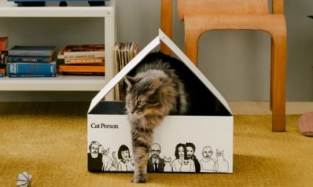 New DTC Brand Cat Person Caters to Cat Lovers and Their Pets