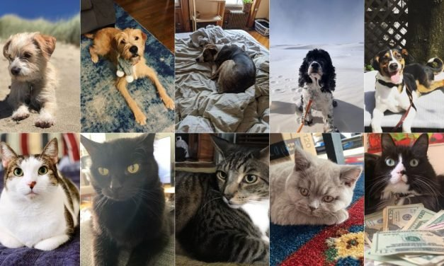 A Definitive Ranking of All the Jezebel Pets, As Judged by 3 Kids