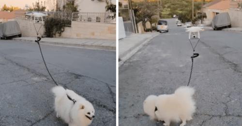 Drone Walks Dog For Quarantined Man During Coronavirus Outbreak
