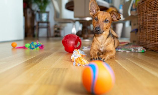 All the toys and treats you need to keep your pet happy at home