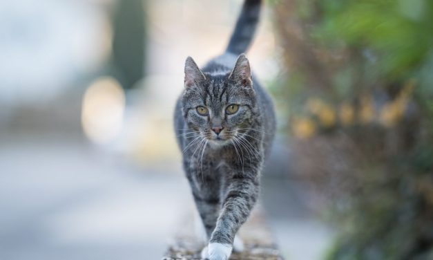 A Cat In Belgium Tested Positive For COVID-19, But You Shouldn't Panic