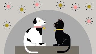 Can cats get coronavirus? And can you take your dog for a walk? Latest advice for pet owners