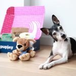 Best dog food delivery services for 2020: Pet Plate, BarkBox, Chewy, Ollie and more compared – CNET