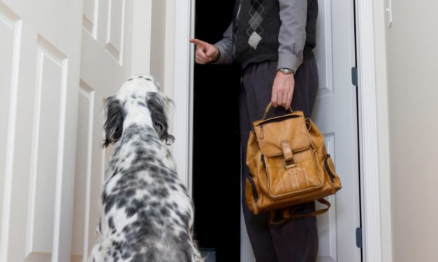 How to ease pets' separation anxiety when owners leave home
