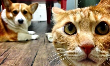 How Cats, Dogs And Birds See The World