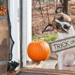 How to Keep Your Pets Safe on Halloween
