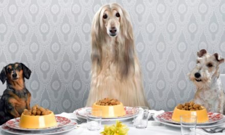 Upscale Pet Foods Proliferated in the Pandemic—Now They're Plunging Owners Into Debt