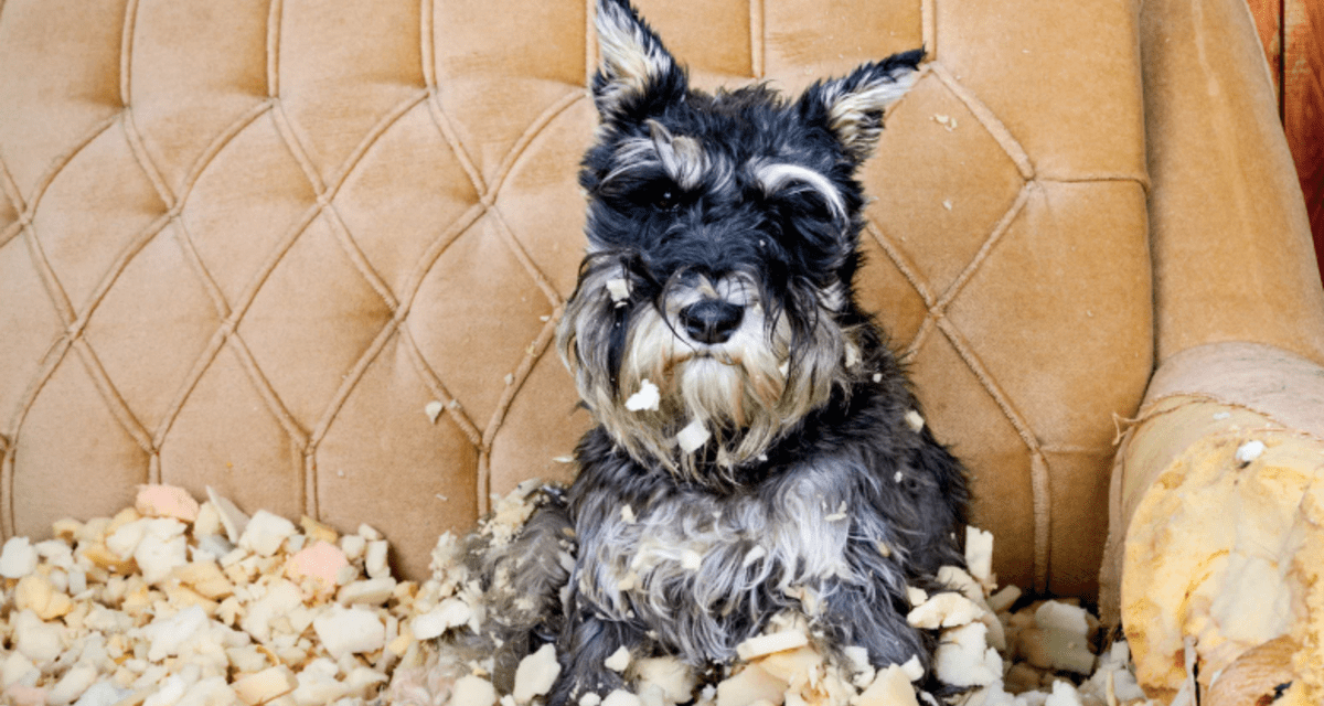 How to Keep Your Pets from Ruining Your Stuff