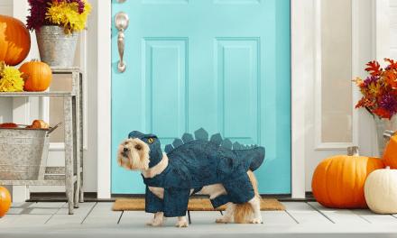 15 amazing pet Halloween costumes you need to buy
