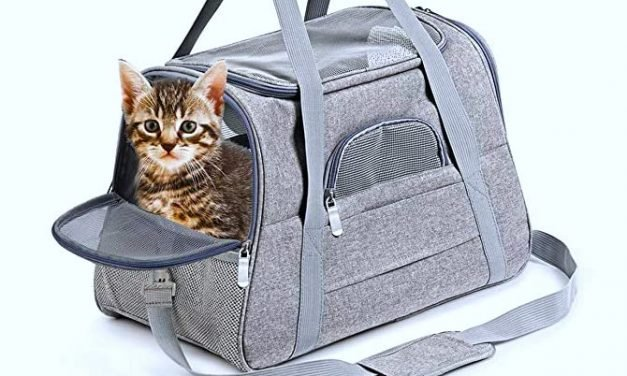Here's The Best Pet Stuff We Found On Amazon With Great Prime Day Deals