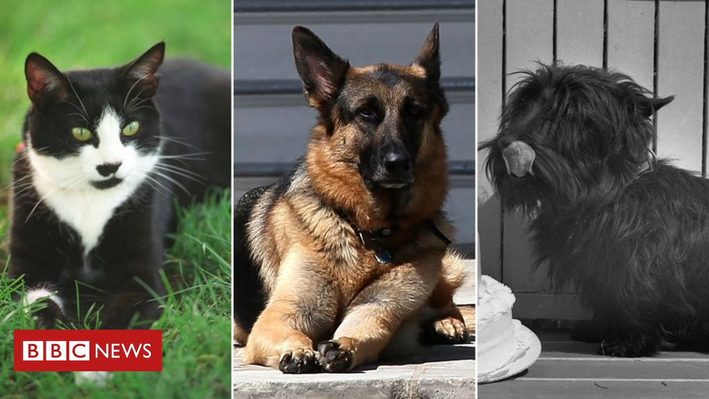 US election: Champ, Major and other White House pets