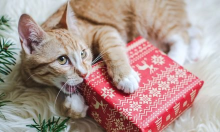 How To Prepare For Your First Christmas With A New Pet