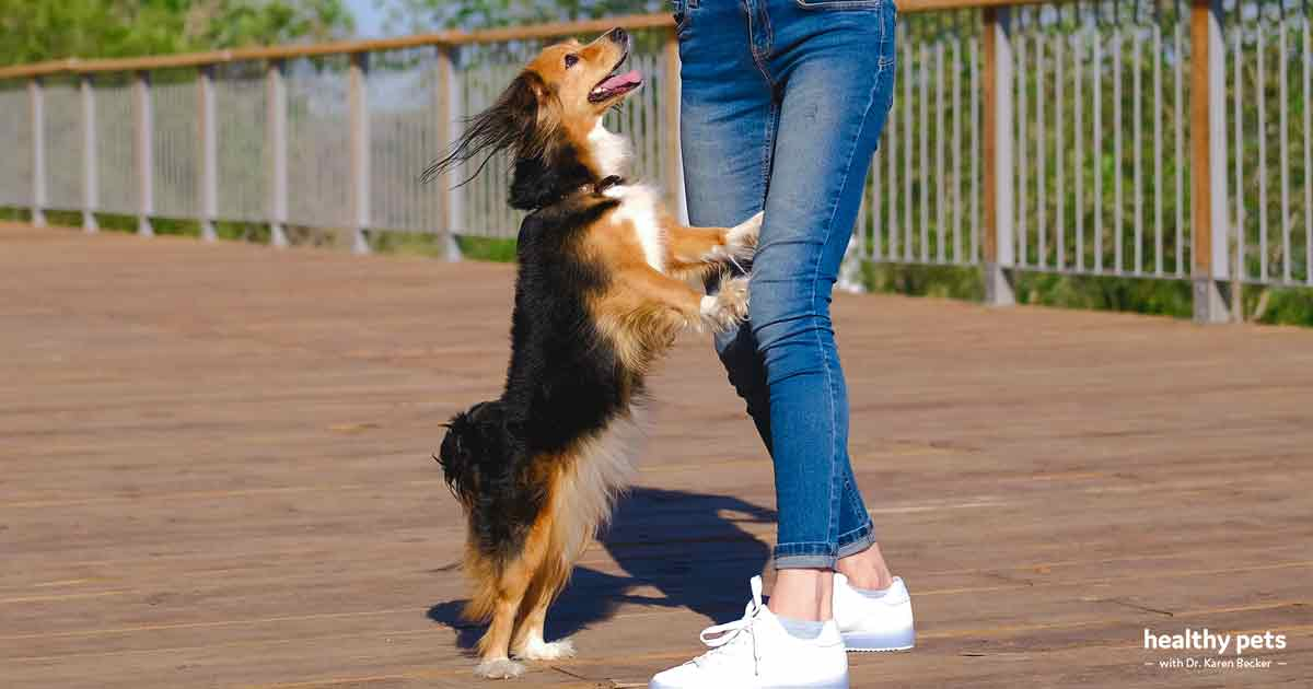 The Wrong Way to Train Your Dog Not to Jump Up on People