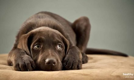 Is Your Dog Suffering From Anxiety?