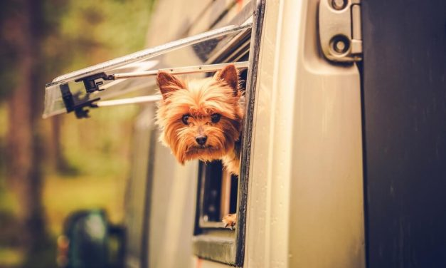 5 Best RVs for Traveling With Pets