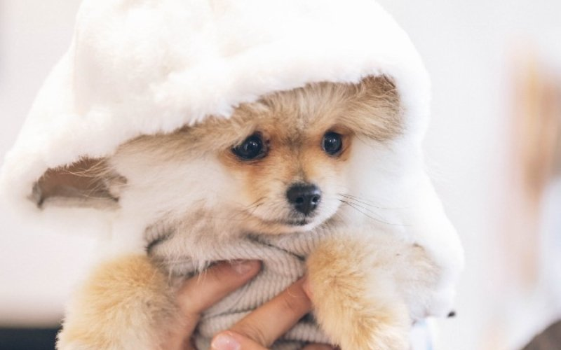 I'm Getting a New Dog and I'm Terrified
