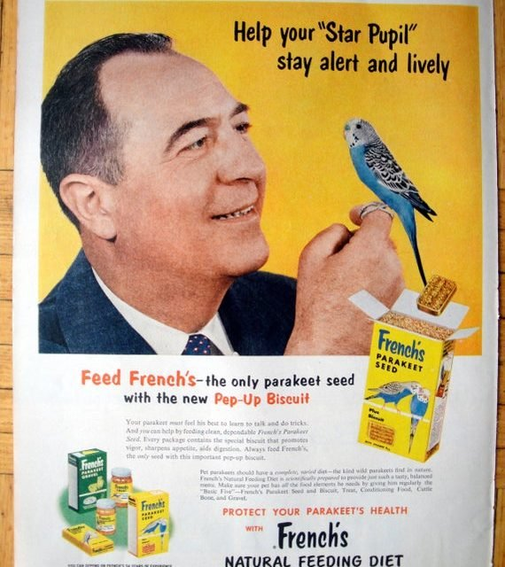 1956 Parakeet French's Seed-For Your Star Pupil- Original 13.5 * 10.5 Magazine Ad-Pet Food