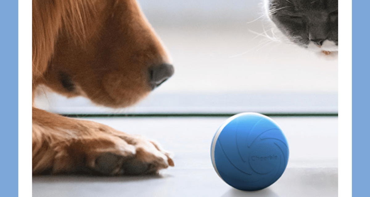 Save an extra 15 percent on these interactive pet toys on sale for Presidents Day