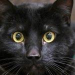 Pet of the week: Winston