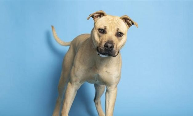 Nali, Jenny and more pets up for adoption in Phoenix-area shelters this week