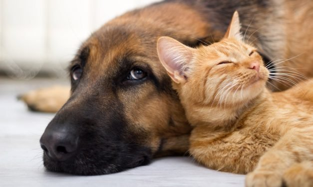 Infographic: How much does it cost to have a dog and a cat?