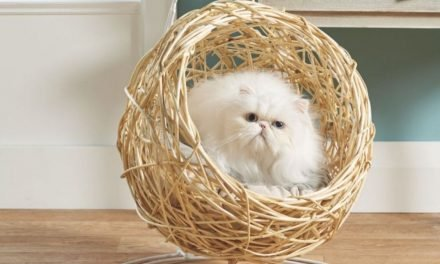 Aldi's best-selling hanging egg chair is back – but this time it's for your cat