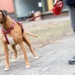 German dog tax sees record spike in revenue during pandemic