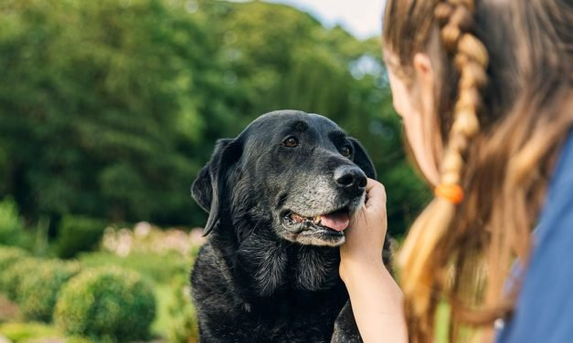 How to Spot Cognitive Dysfunction in Aging Pets (and What You Can Do to Help)