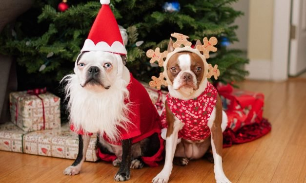 Holiday Pets: The Ultimate Guide to Celebrating with Furry Family Members