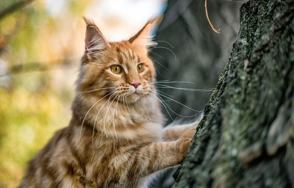 Most Beautiful Cats (with Pictures): 10 Different Types of Enchanting Cat Breeds